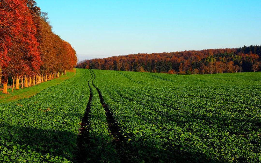 Agricultores, aliados del medio ambiente