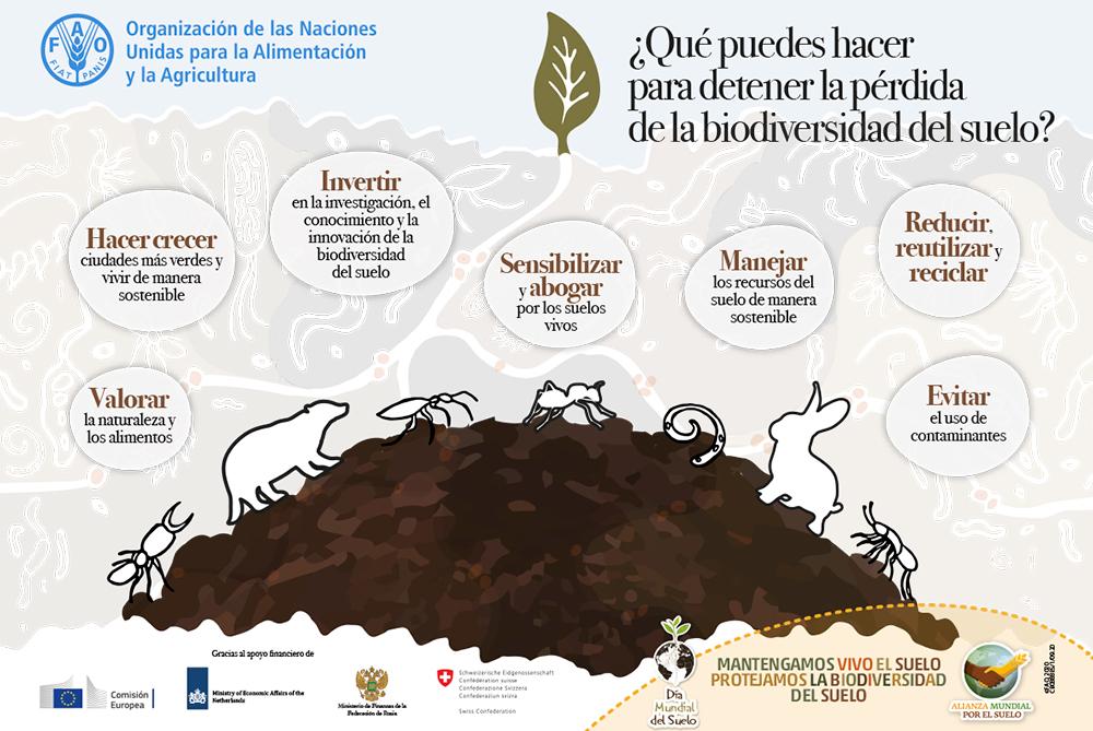 FAO cartel del suelo