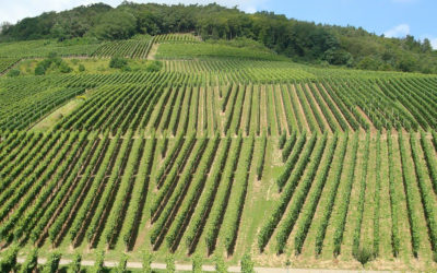 Por una agricultura más moderna y comprometida con el medio ambiente