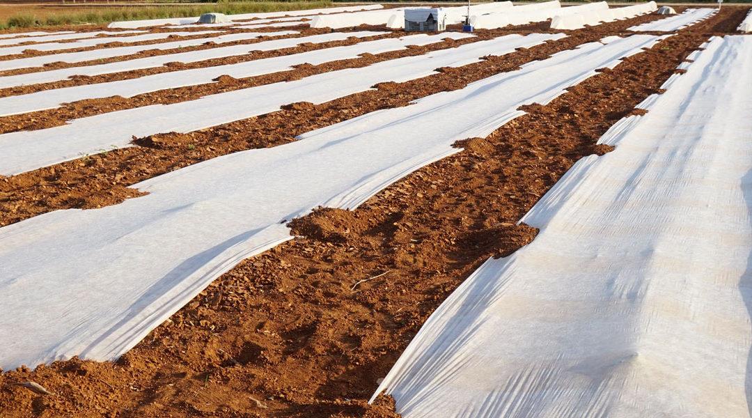 Los plásticos en la agricultura