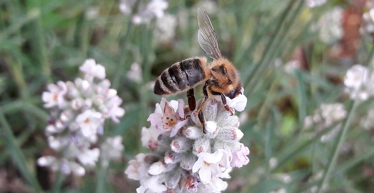 Biodiversidad polinización