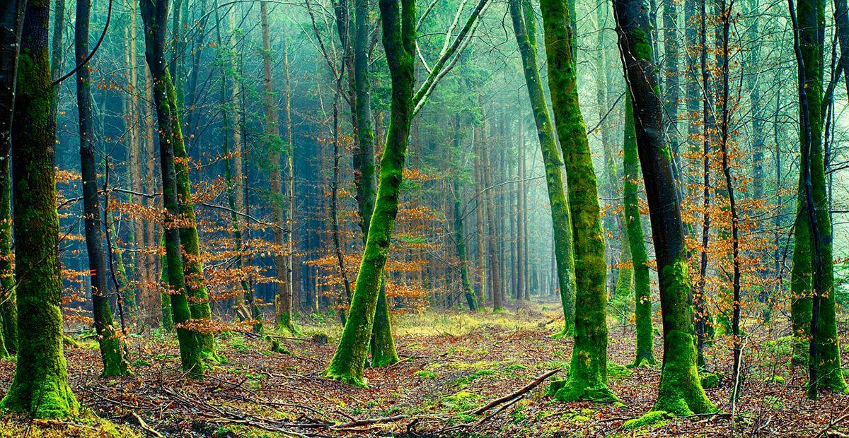 Bosque reforestación