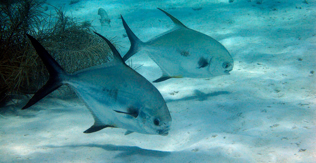 Ecosistema acuático