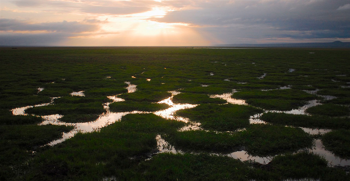 Ecosistema tierra
