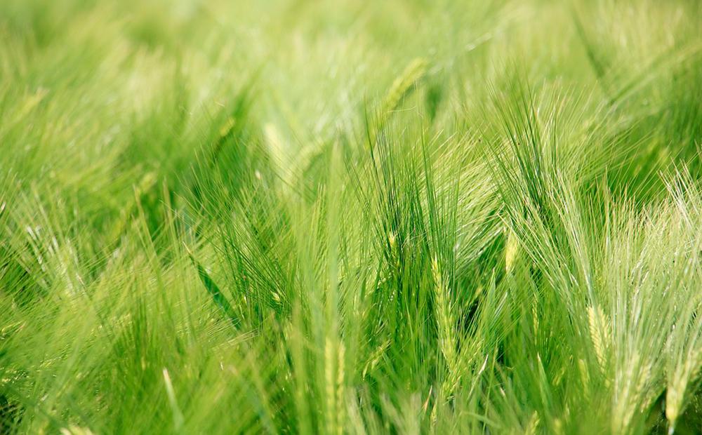 Día Mundial de los Fertilizantes