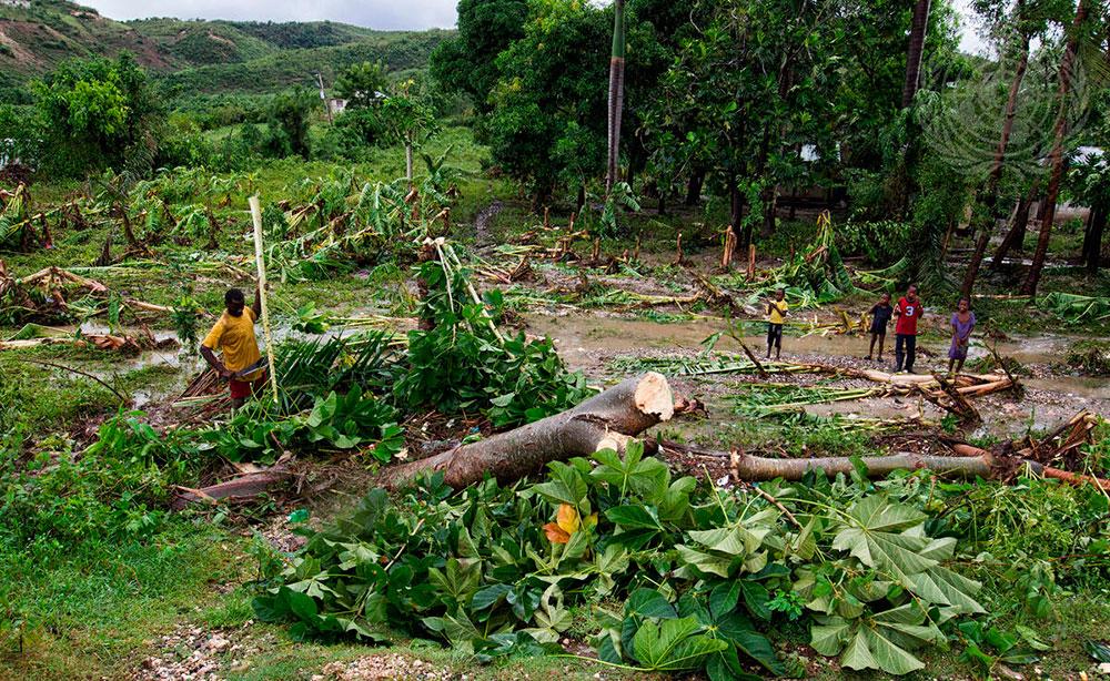 Deforestación en la selva