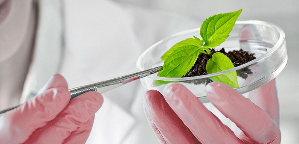 Fábrica de fertilizantes Fertinagro