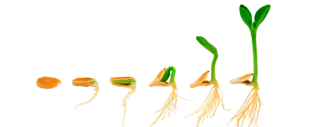 Fertilizantes Fertinagro Biotech
