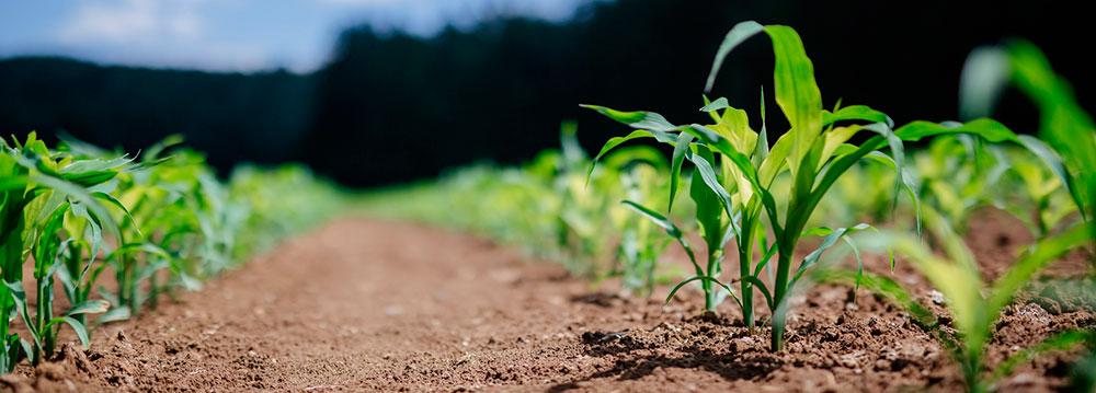 Una agricultura eficiente